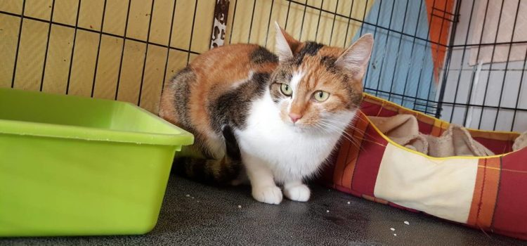 Chats à adopter